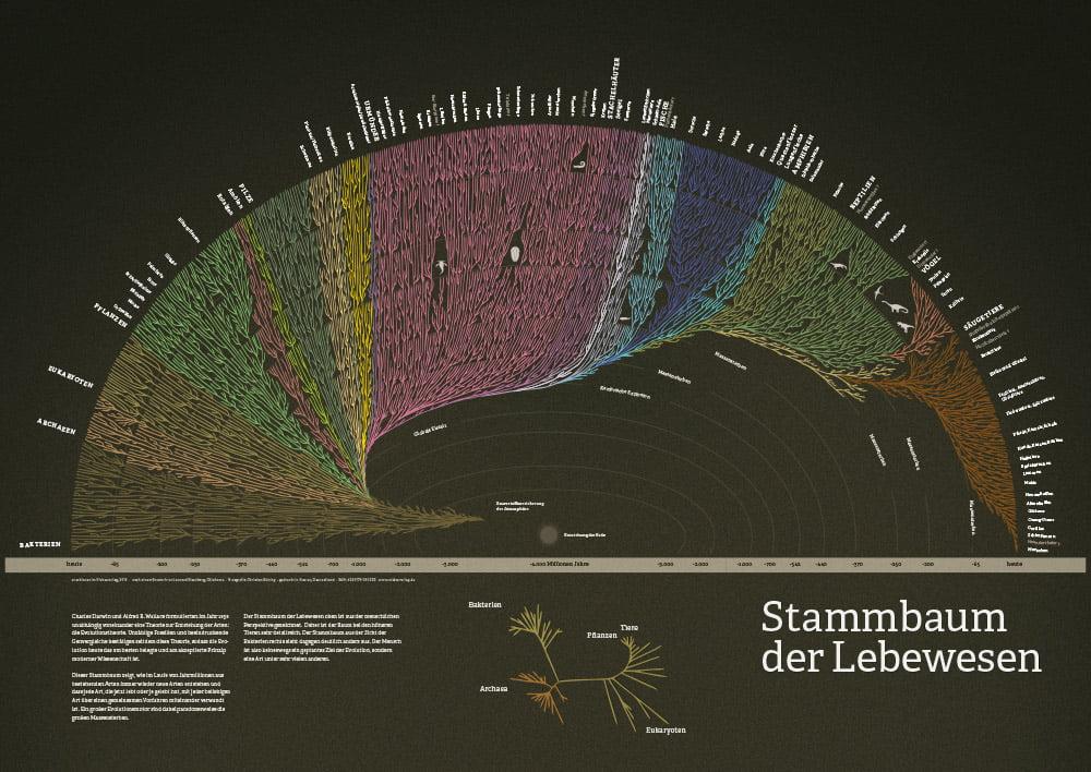 Der Stammbaum der Lebewesen als schönes Plakat. Darwin hatte Recht